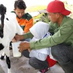 Wisata Sambil Belajar Di Taman Edukasi Peternakan Sato Loka