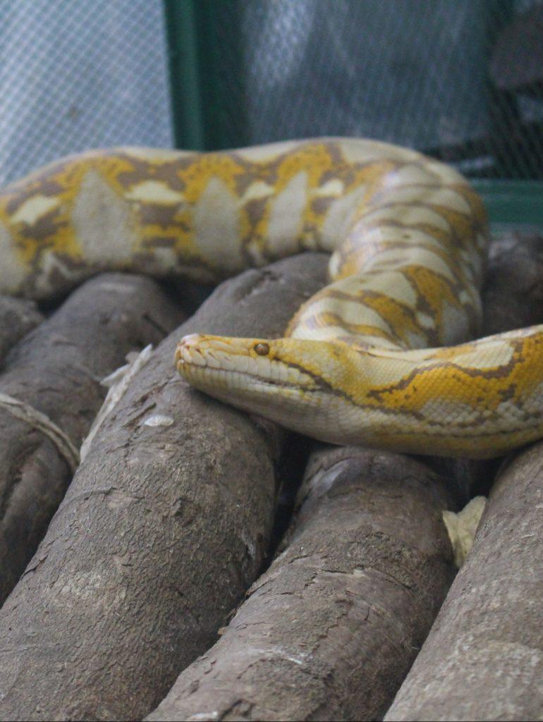 taman reptil di yogyakarta